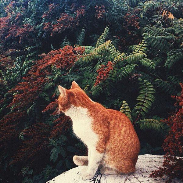 🐱 Cat Pets