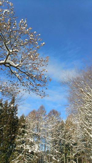 Japan Nagano Landscape Skyporn Winter Sky Shiga-kogen 一眼でも撮ってみたのにPCへ移したら消えてしまいました?⤵⤵勉強不足でした?
