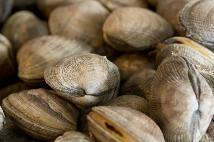 Close-up of clams at market for sale