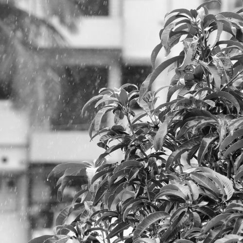 Rainy Day Rainy Weather Daylight Nature Plant Outdoors No People EyeEmNewHere