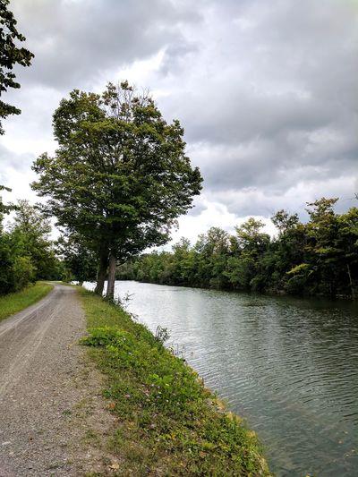 Trail run Tree Nature Outdoors Sky Running River Summer Humid Upstate NY Syracuse