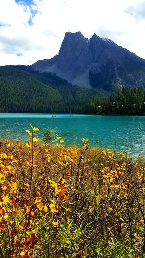 Mountain Growth Beauty In Nature Water Plant Fragility Scenics Yellow Tranquil Scene Lake Sky Nature Tranquility Freshness Mountain Range Idyllic Cloud Non-urban Scene In Front Of Fall Colors Season