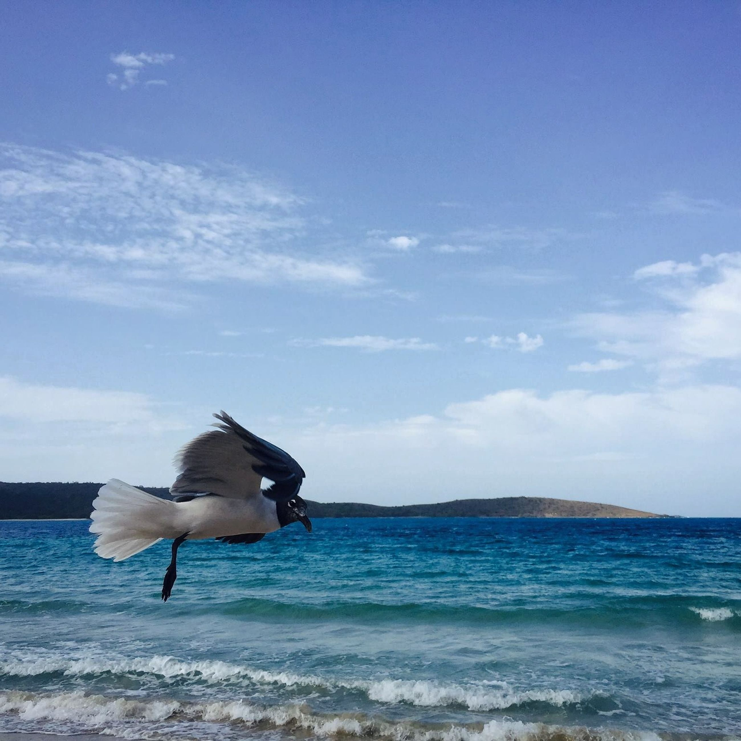 sea, water, horizon over water, beach, sky, flying, bird, seagull, shore, blue, beauty in nature, nature, tranquility, tranquil scene, spread wings, sand, scenics, cloud, one person, cloud - sky