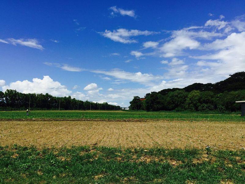 Nueva Ecija Fields Green Agriculture