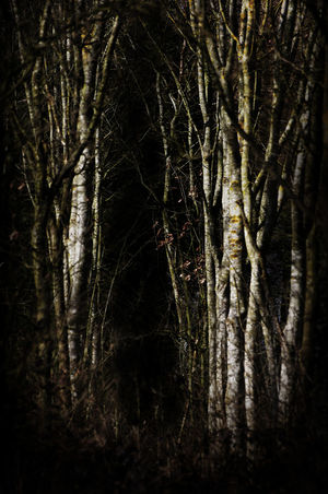 Bare Tree Beauty In Nature Branch Creepy Woods Dark Darkness Eerie Forest Growth Nature No People Non-urban Scene Outdoors Sinister Spooky Tranquil Scene Tree Tree Trunk WoodLand Natures Diversities Fine Art Photography Perspectives On Nature A New Perspective On Life Capture Tomorrow