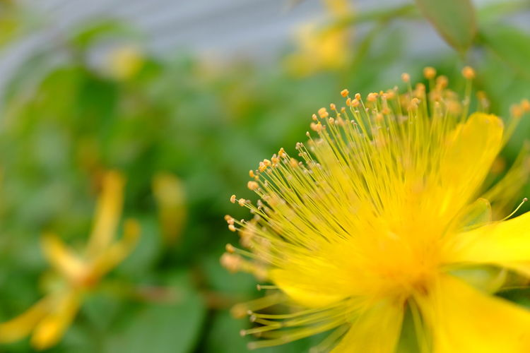 Flower Head Flower Yellow Closing Defocused Springtime Beauty Summer Multi Colored Uncultivated