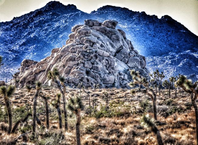 Joshua Tree Joshua Tree Joshua Tree National Park Joshuatree Joshuatreenationalpark Desrt Scenes Deserts Around The World Desert Beauty Desert Landscape Desert Life Desert EyeEm Best Shots EyeEm Nature Lover EyeEm Gallery Eye4photography