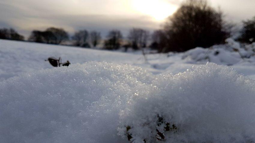 Animals In The Wild Animal Wildlife Animal Snow Winter Cold Temperature Nature