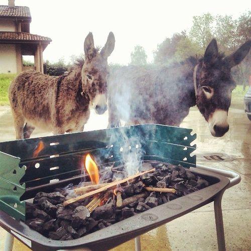 Grigliata di Pasquetta con gli Amici :* Donkey Ciuchino