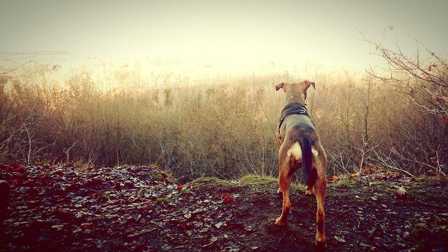A Bird's Eye View Dogphoto Dogslife Dogmodel Doglovers Dogs Life