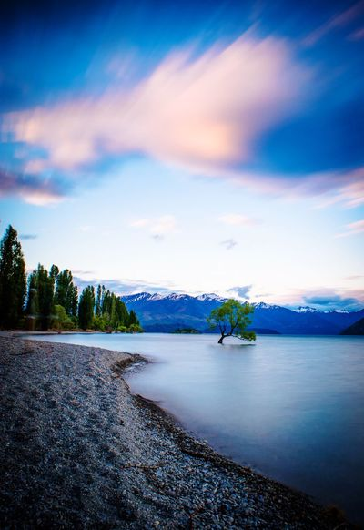 Lake Wanaka Tree New Zealand Scenery Lake Mountains Snow Dusk Shore Lakeside Evening Sky Clouds