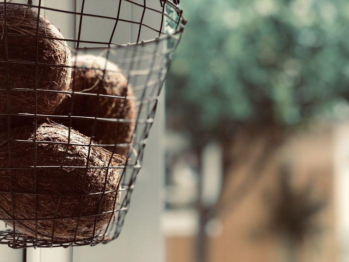 Close-up of bird in basket