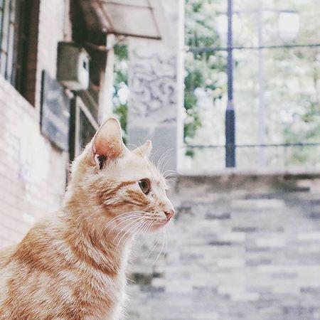 hello~ Cat Canton Guangzhou