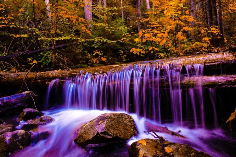 Water Scenics - Nature Tree Motion Beauty In Nature Long Exposure Waterfall Forest Rock Plant Nature Flowing Water Land Rock - Object Blurred Motion Flowing No People Solid Non-urban Scene Stream - Flowing Water Outdoors Change Rainforest WoodLand Power In Nature