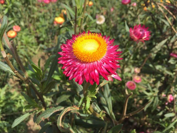 Flowers Amazing Thailand