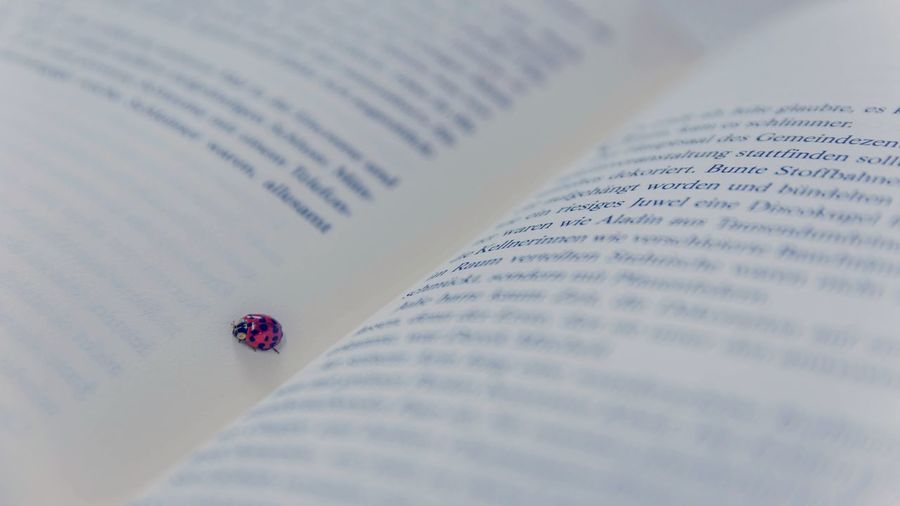 Close-up of ladybug on book