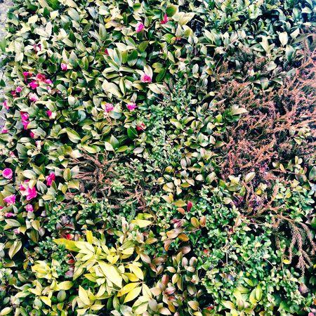 嵐山 植物