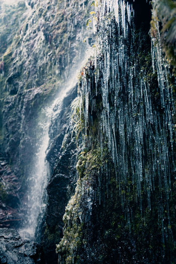 Icicles by waterfall in forest