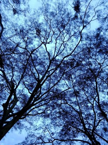 Tree Low Angle View Nature Branch Sky No People Beauty In Nature Growth Full Frame Outdoors Backgrounds Close-up Day Tranquility First Eyeem Photo EyeEmNewHere