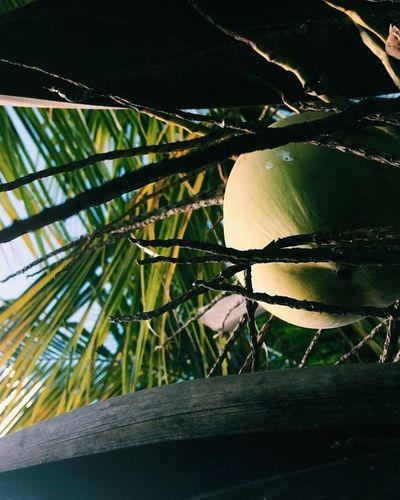 Pictures Amazing Plant Camera - Photographic Equipment