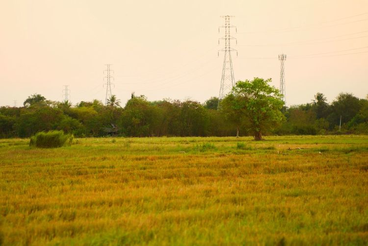Landscape of rice field with selective focus on tree and high voltage towers in background in the sunset sky Sunset Landscape Forest Tree Pylon High Voltage Tower Twilight Field Rice Plant Field Sky Electricity  Land Electricity Pylon Technology Landscape Tranquility Environment Cable Power Line  Tree Nature Tranquil Scene Agriculture Rural Scene Beauty In Nature Scenics - Nature