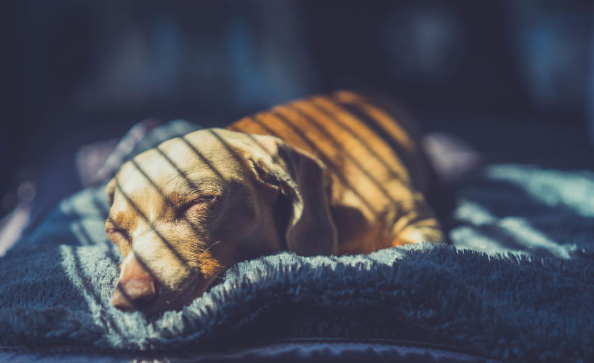 Close-up of a sleeping dog