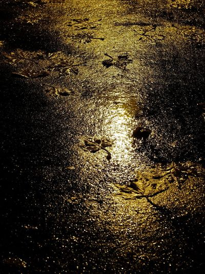 High angle view of wet street at night