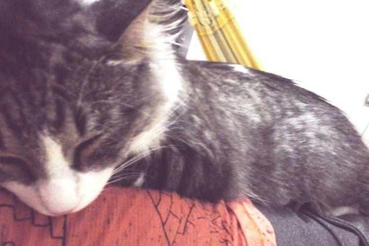 Fofis Friends ❤ Pets Cat Friendship