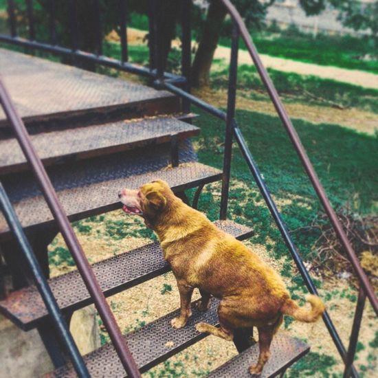 High angle view of dog on railing