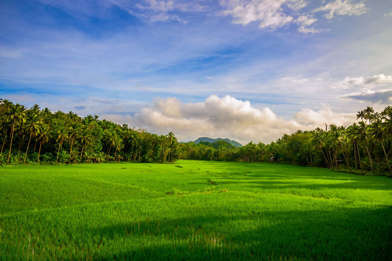 View from the road near the Chocolate Hills Agriculture Beauty In Nature Cloud - Sky Day Farm Field Golf Course Grass Green - Golf Course Green Color Growth Landscape Lush - Description Lush Foliage Mountain Nature No People Outdoors Rice Paddy Rural Scene Scenics Sky Tea Crop Tree Lost In The Landscape