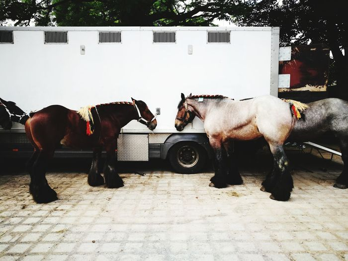 Horses Standing Outdoors
