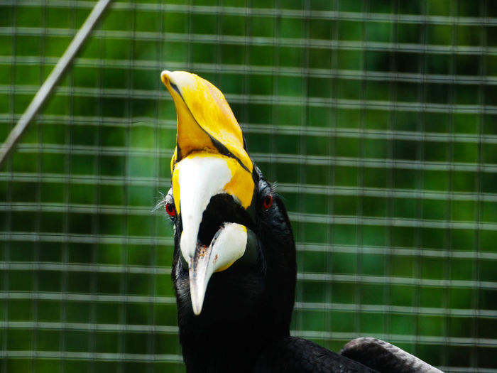 Close-up of yellow bird in cage at zoo