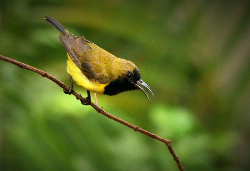Bird Singing Bird Photography Bird Watching Birdfreaks Birding Bird nectarinia jugularis