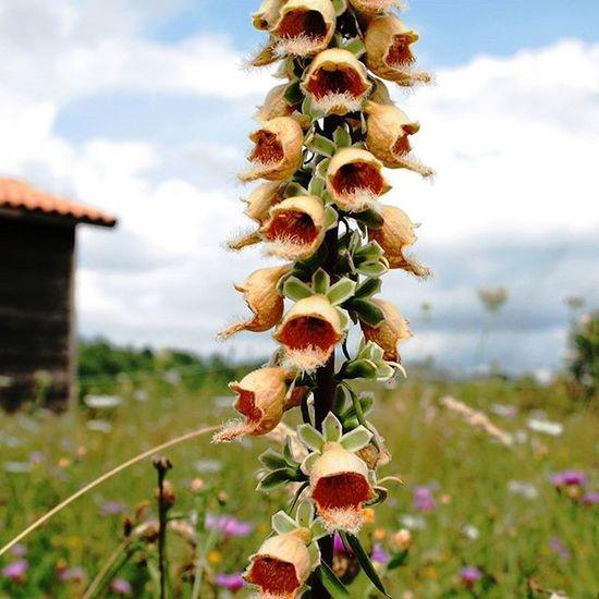 2010 Montagna Molise Loves_molise Passeggiata Passeggiando Loves_molise Natura Misorottoamettehastag