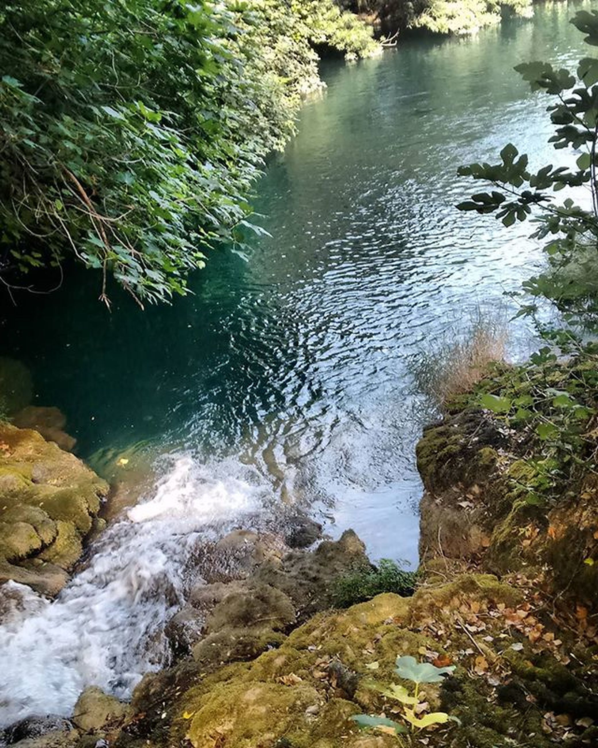 water, rock - object, nature, beauty in nature, high angle view, tranquility, river, stream, scenics, tranquil scene, tree, reflection, day, forest, outdoors, no people, growth, plant, rock, flowing water