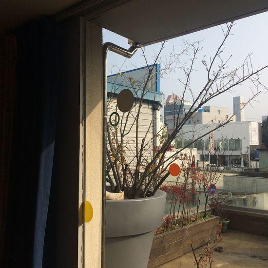 sunny day✨ Sunny Day Restaurant