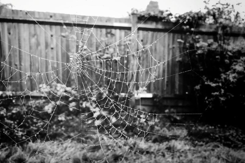 Spiders Web Spidersweb Taking Photos Nature Nature_collection Capture The Moment Mobilephotography IPhoneography Blackandwhite