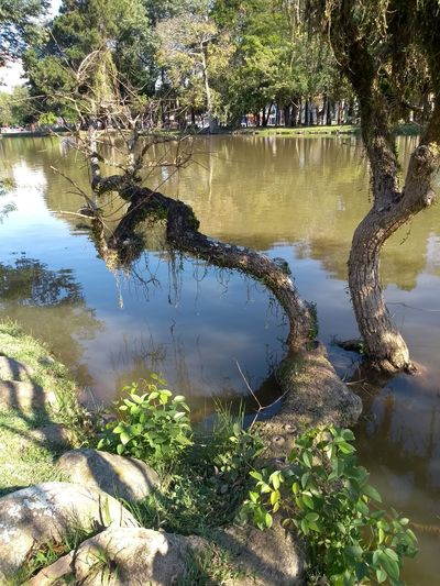 Trees 1 No People Taking Photos Outdoor Photo Water Tree Lake Reflection Close-up Water Surface Calm Foreground