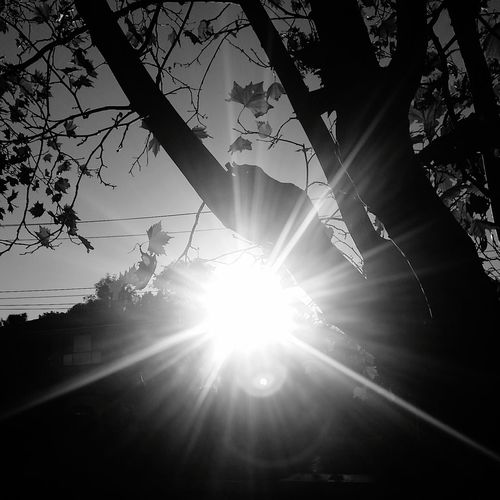 Taking Photos Enjoying Life Liquid Amber Leaves Leavesporn Autumn Autumn Leaves Showcase April Black And White Black And White Collection  Black And White Photography Blackandwhite Photography Sunset_collection Sunset Trees And Sky