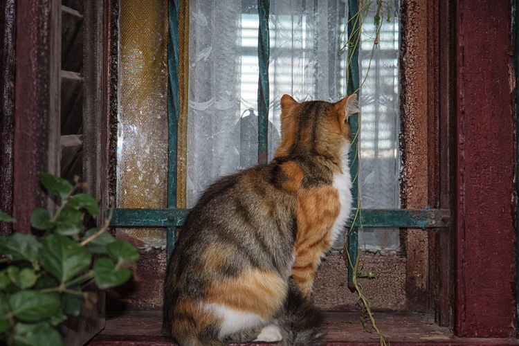 Rear view of cat sitting on window sill