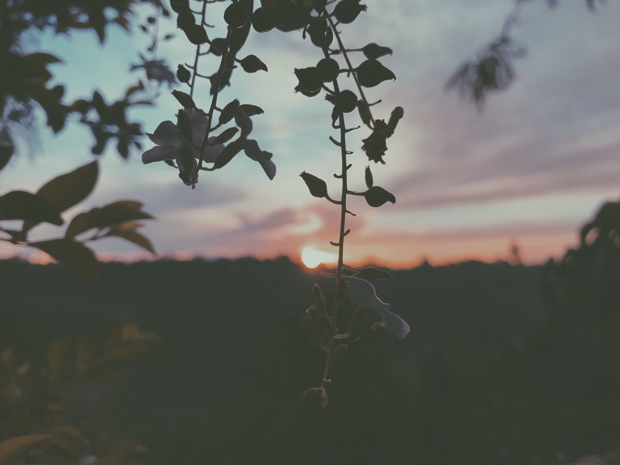 nature, leaf, plant, growth, outdoors, no people, beauty in nature, focus on foreground, day, close-up, tree, fragility, sky