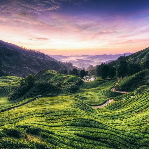 Sungei palas sunset Cameronhighland Morning Teafarm Sunset bestmoment weekend hdr tea brinchang gunungirau nature sky fresh