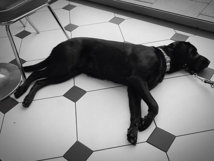 Welcome To Black the black dog Pets One Animal Animal Themes Domestic Animals Dog Mammal Indoors  High Angle View Home Interior Lying Down No People At Home Day Guide Dog The Street Photographer - 2019 EyeEm Awards