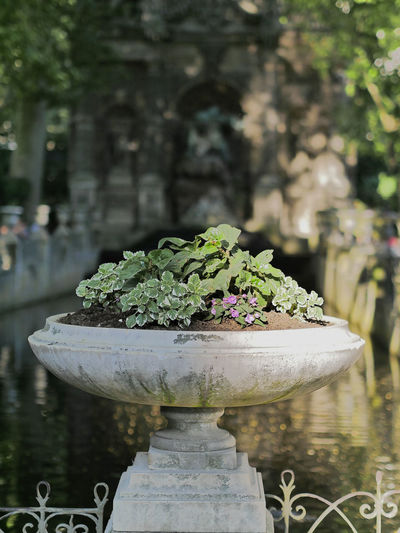 Parc du Luxembourg City EyeEm Premium Collection Green Paris Sunny Close-up Day Destination Editorial  Europe Flower Focus On Foreground Garden Green Color Leaf Nature No People Outdoor Outdoors Park Plant Potted Plant Street Travel Destinations Urban