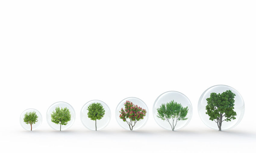 Potted plants against white background