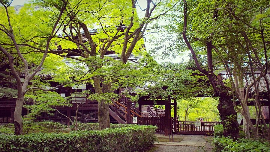 真如堂 真正極楽寺 Kyoto,japan Tranquil Scene Travel Destinations Japan Photography Plant Tree Green Color Growth Day Built Structure Architecture Sunlight Beauty In Nature Building Building Exterior Tranquility