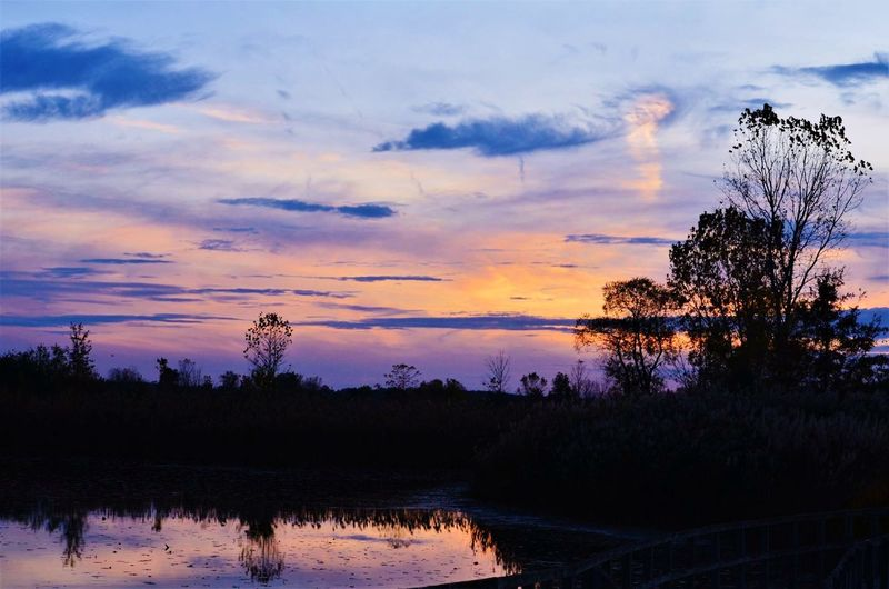 Purple sunset Cloud - Sky Sky Water Sunset Tree Plant Lake Beauty In Nature Scenics - Nature Reflection Nature Outdoors