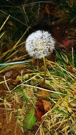 EyeEm Ready   Flower Nature Fragility Flower Head Growth Plant Close-up