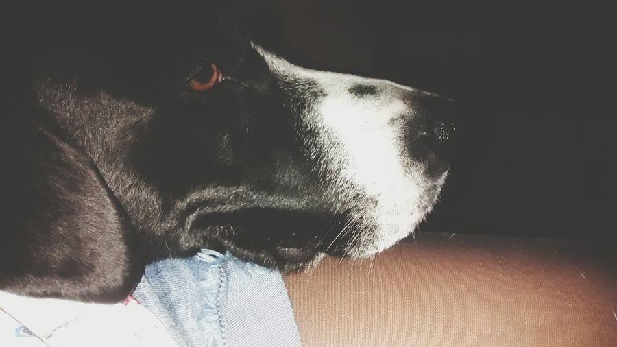 Mylove ❤️ Mydog♡ Legs Dog Love