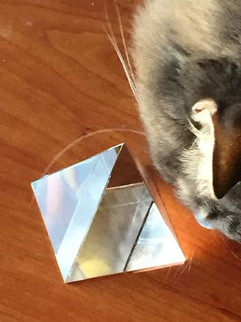 Cat with glass pyramid Animal Themes Animals Cat Close-up Day Glass Glass Pyramid Indoors  Light Mammal No People Pets Reflections